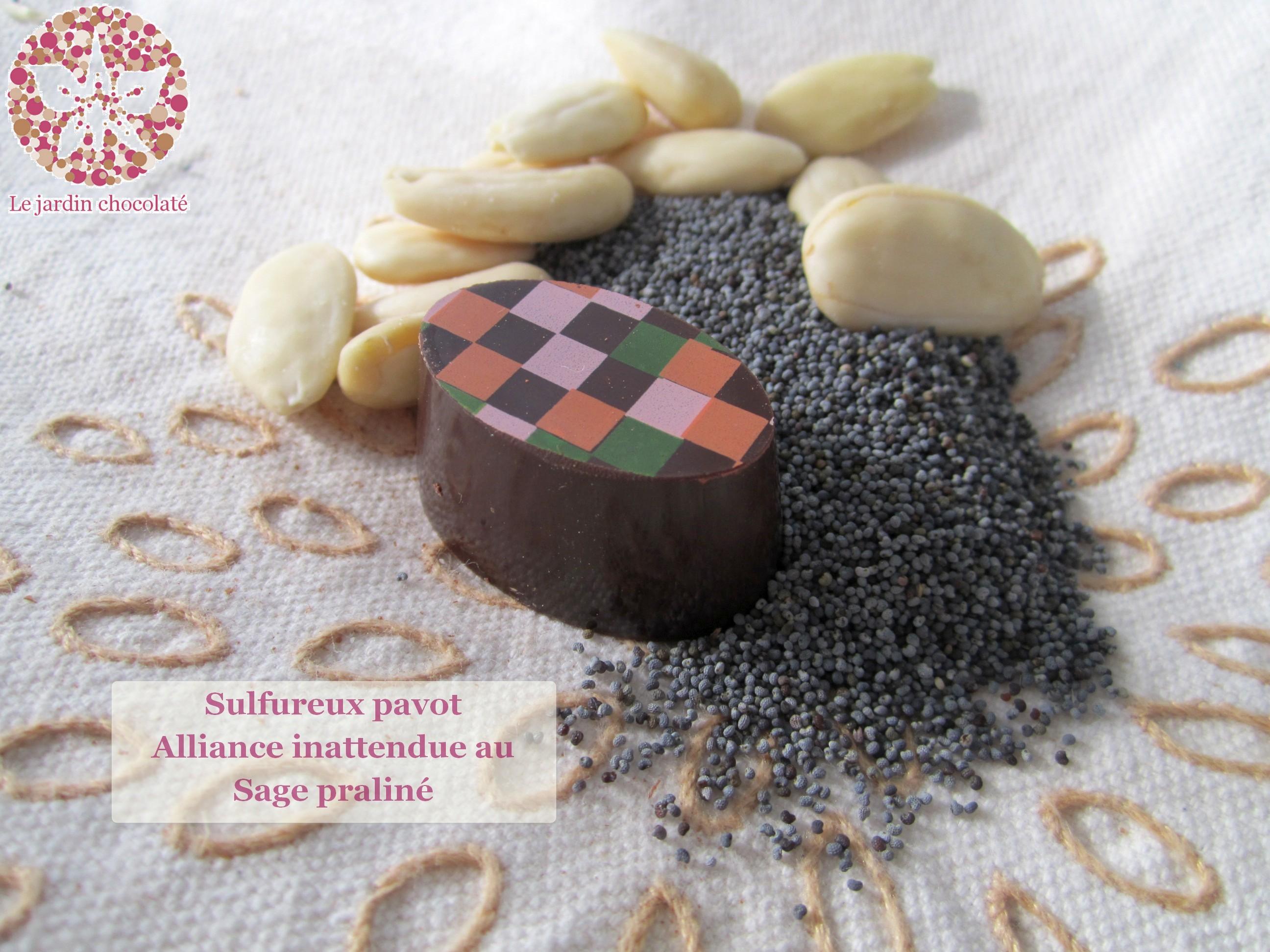 Le jardin chocolaté - Pavot